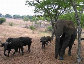 禁止濒危野生动物国际贸易公约的约束